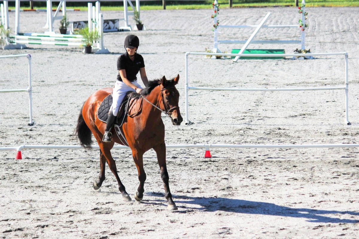 Katie McIntyre on her green OTTB, Indian Fighter, winning Intro Dressage. Photo by Steven King.