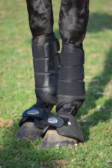 I've found that the Weatherbeeta Exercise and Bell Boots pair oh so very well together. They provide a look that is crisp, clean and visually appealing. Photo by Lorraine Peachey.