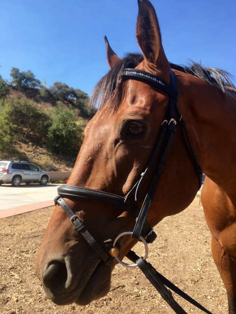 Rico models his snazzy Custom Crystal Browband. Photo by Sally Spickard.