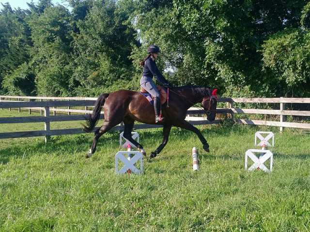During wear, I've found that Roo does get protection from the boots. I wear them on him for flatwork, working with cavaletti, and also for going over small jumps. Photo by Andrew Lapp.