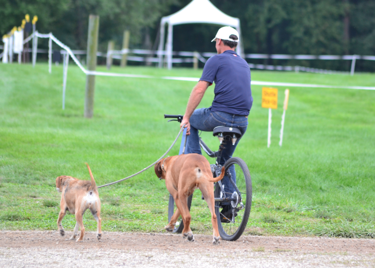 Matt Brown's dogs are bicycle-leash trained. Photo by Leslie Wylie.