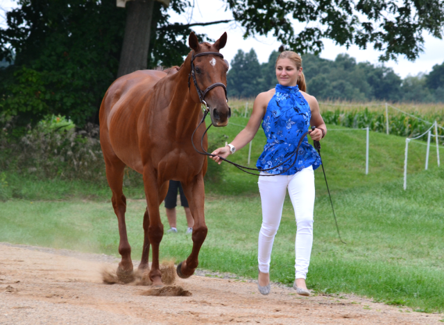 Tracey Bienemann and Geoni, an 8-year-old Thoroughbred gelding. Photo by Leslie Wylie.