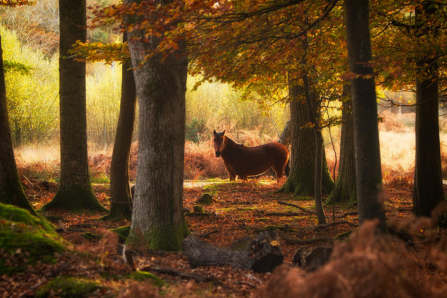 I love this photo for the autumn feel, but the artist has an awesome series of shots from an impromptu encounter with this New Forest Pony. Photo by Tommy Clark/CC/Flickr.