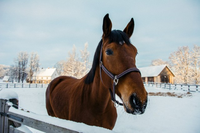 Are you and your horse prepared for winter? Photo by barnimages.com / Creative Commons