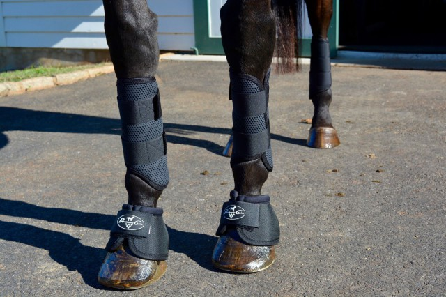 The Pro Performance boot series includes these cross country boots and overreach boots which are lightweight but very durable and protective. Photo by Kate Samuels.