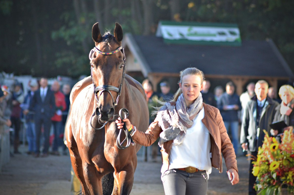 Stephanie Böhe (GER) and Haytom, 1st place heading into Boekelo show jumping. Photo by Leslie Wylie.