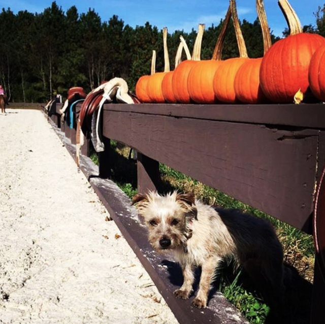Does your pup have what it takes to be EN's Thanksgiving Top Dog? Baxter does! Photo courtesy of Brittany Walker.