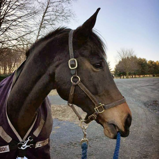 Happy enjoying his winter vacation! Photo courtesy of Phillip Dutton Eventing.