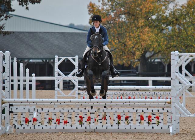 Photo via Sport Horse Nation
