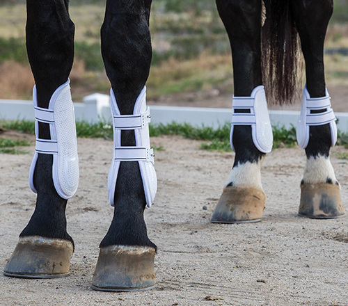 Enter to win Professional's Choice Pro Mesh TPU Show Jump Boots!