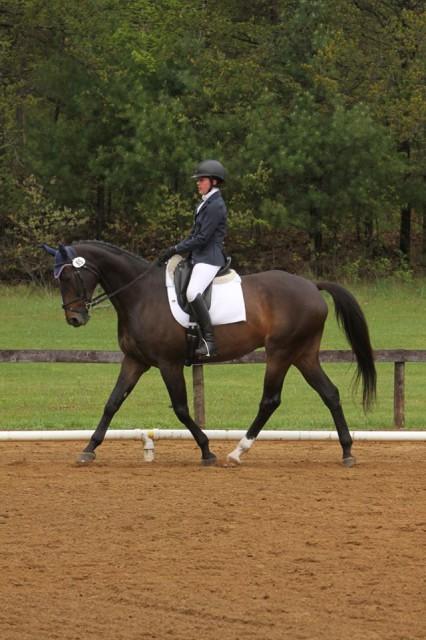 Pax. Photo courtesy of Meaghan Marinovich via Sport Horse Nation.