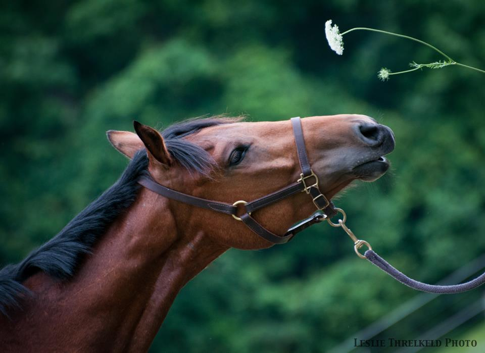 Image result for monday horse flowers