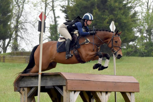 Tilley. Photo courtesy of Jennifer Price via Sport Horse Nation.