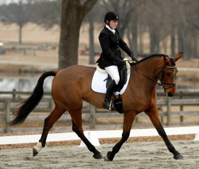 RubyRoc. Photo courtesy of Hayley Parsons via Sport Horse Nation.