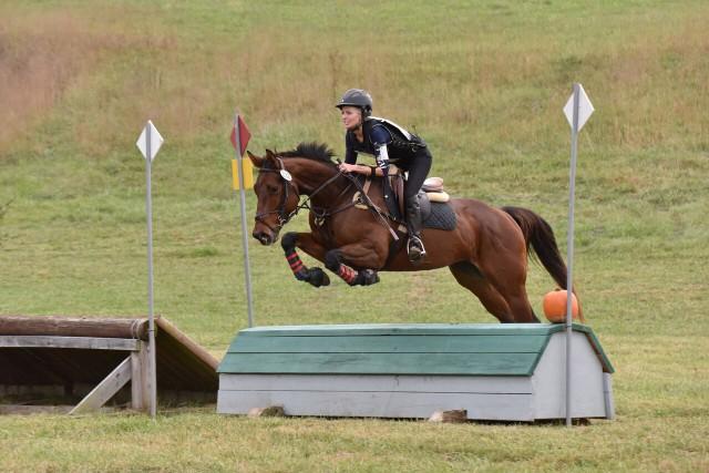 Haberdashery. Photo courtesy of Katherine Gill via Sport Horse Nation.