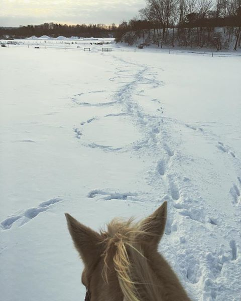 Trail riding with a border collie. Photo by Kristen Kovatch.