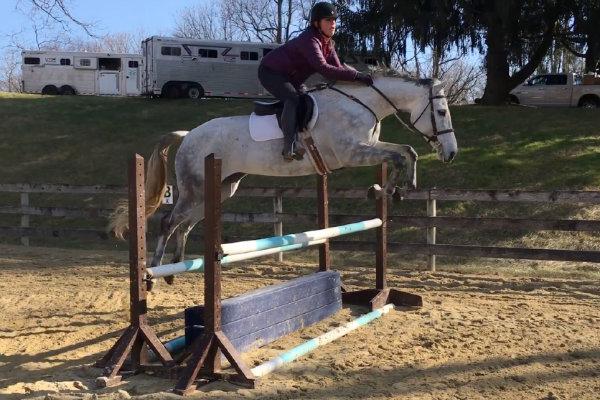 Lexi. Photo courtesy of Courtney Cooper via Sport Horse Nation.