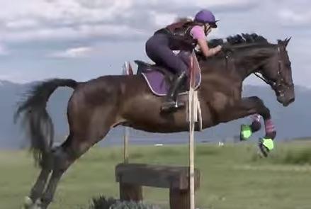 Fernhill Thriller. Photo courtesy of Anna Weatherford via Sport Horse Nation.
