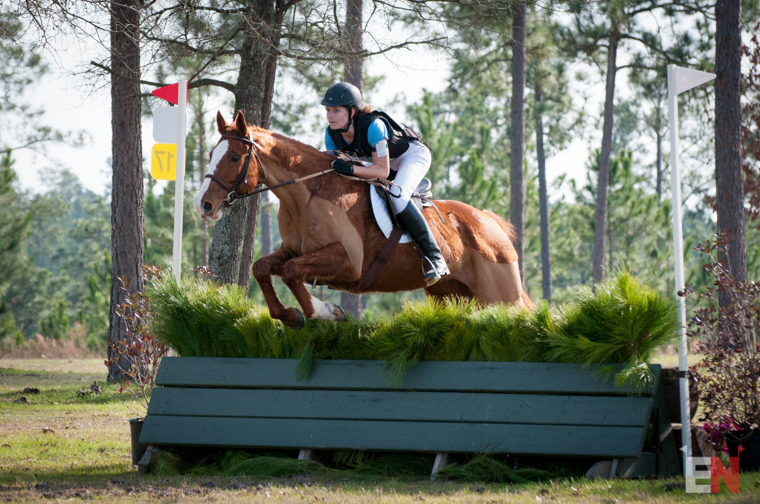 Who Jumped It Best? Stable View Aiken Opener Edition ...