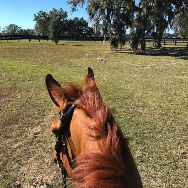 Jenni Autry has been sneaking in  a few days of extra sun in Ocala before the Wellington Showcase. Photo by Jenni.