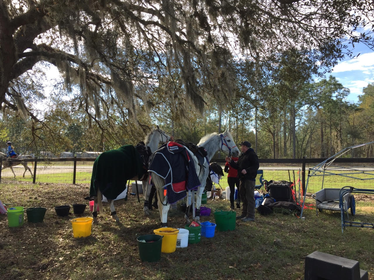 Horses in the cool out box. Photo by Hilda Donahue.