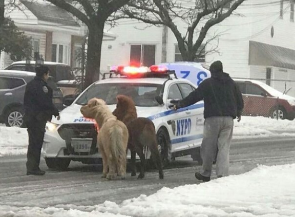 Wrangling ponies in the storm. Photo via NYPD Special Ops Twitter account.