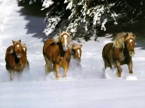 horses-running-thru-snow.jpg