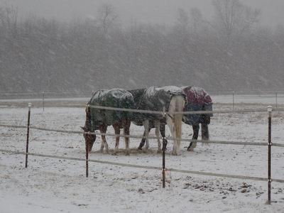 snowhorsesblizzard.jpg