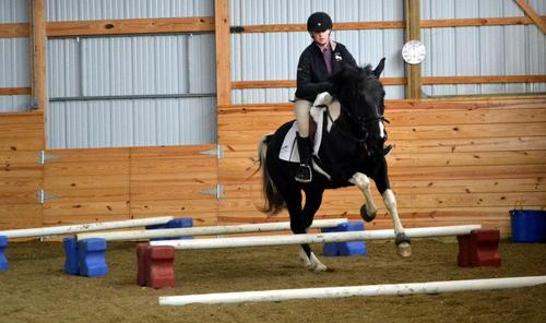Black horse jumping poles.jpg
