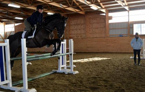 dk bay horse big oxer.jpg