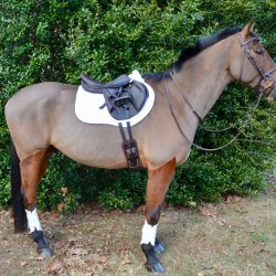 Kate Samuels' Advanced event horse Nyls suited up in his the brown VenTECH Leather Monoflap Girth.