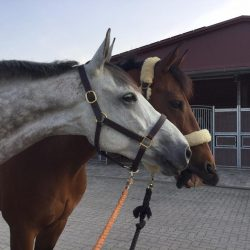 Obos O'Reilly and Cooley On Show are bestest buds now that they went to Luhmuhlen together. Photo courtesy of Will Coleman.