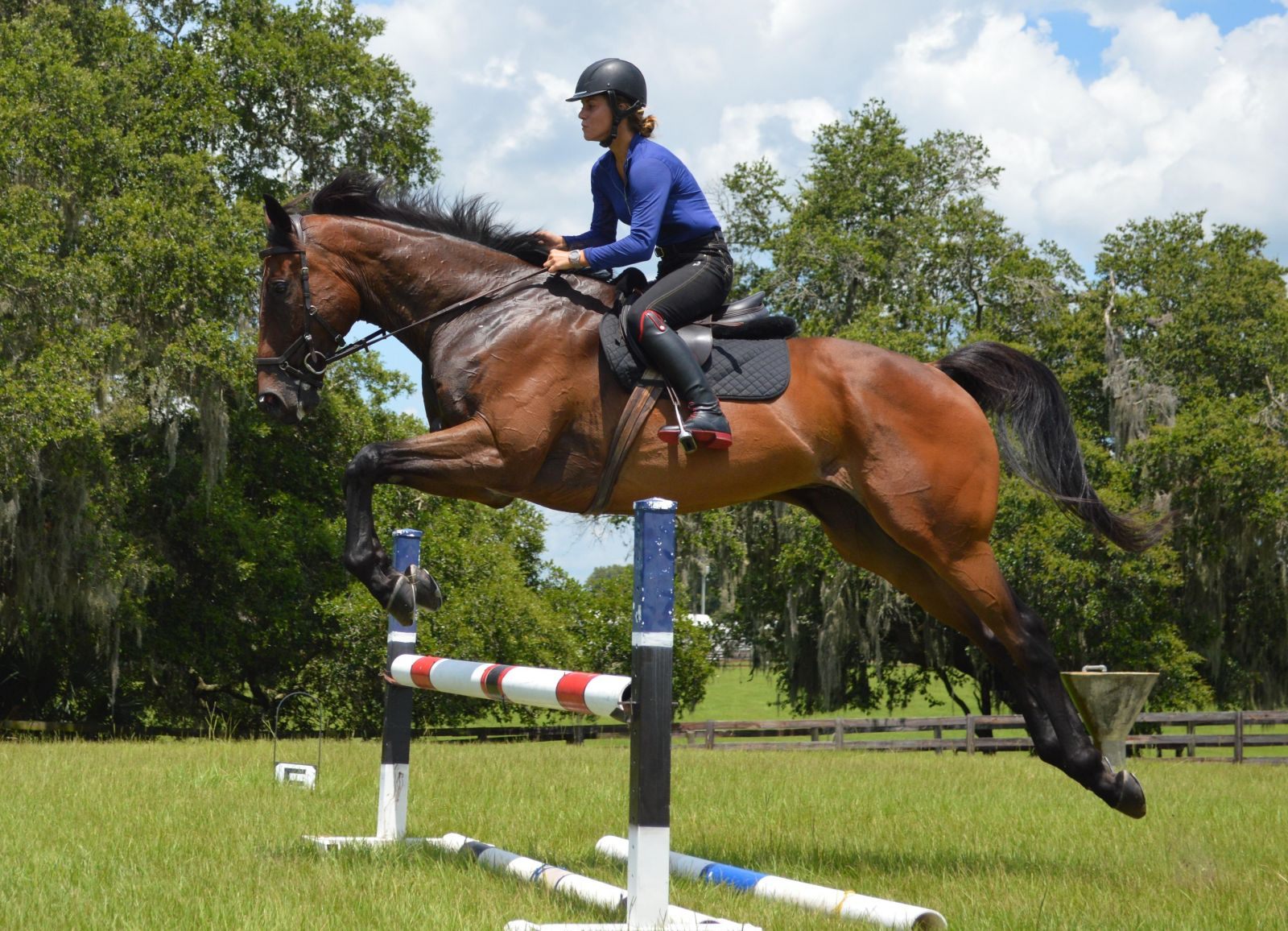 Sport Horse Nation Spotlight 5 Bay Thoroughbred Geldings Eventing Nation Three Day Eventing News Results Videos And Commentary