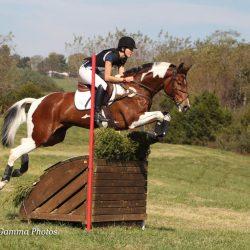 Canso de la Mancha. Photo via Sport Horse Nation.