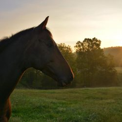 Just a little racehorse enjoying his new lifestyle. Photo by Kate Samuels.