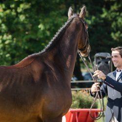 Mathieu Lemoine and Better Win. Photo by Tilly Berendt.