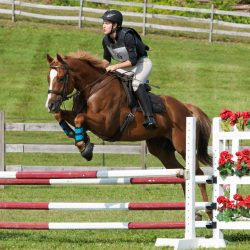 Laddie. Photo via Sport Horse Nation.