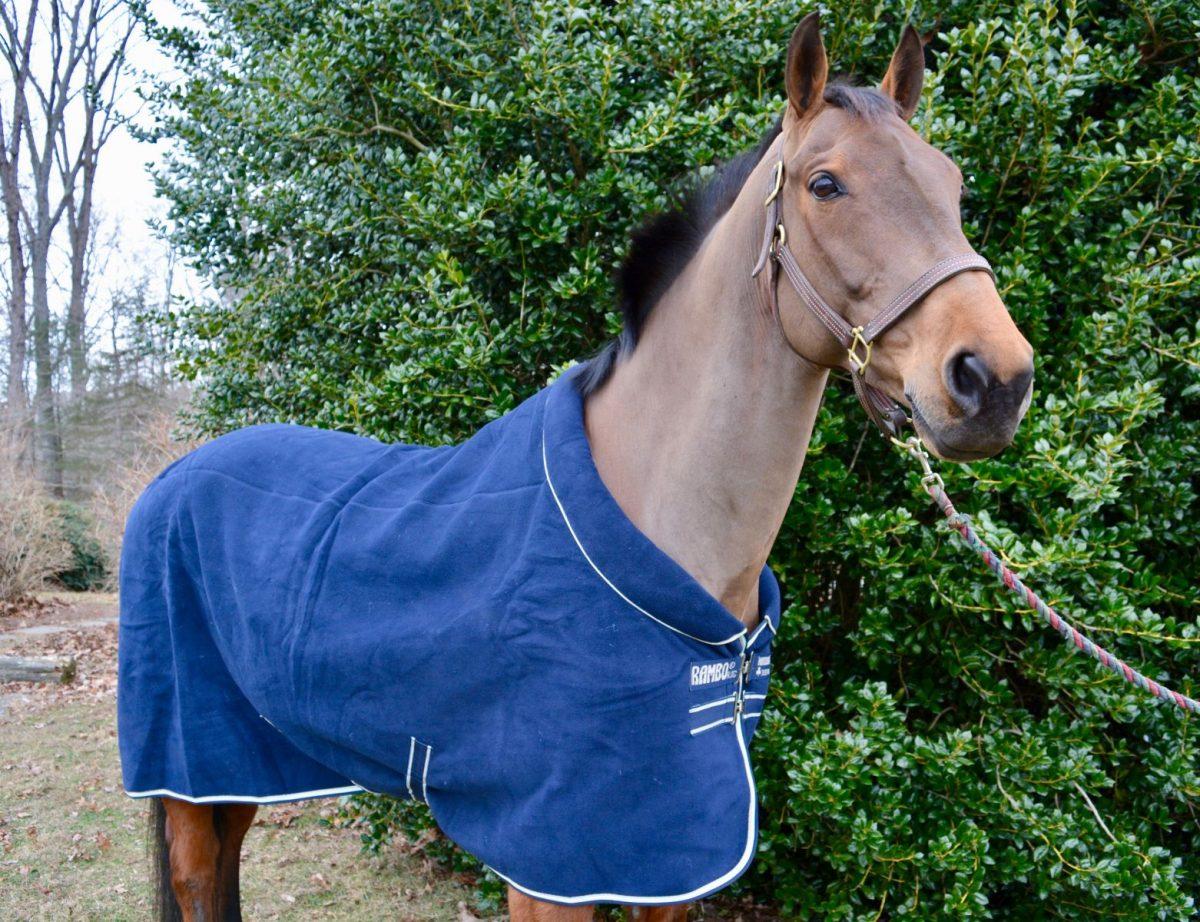 The ultimate cozy fleece blanket - Rambo® Softie Fleece