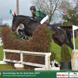 The top-grossing sale at Goresbridge was Gurtea Mattie Clover, who was purchased for €130,000. Photo courtesy of the Goresbridge Go For Gold Sale.