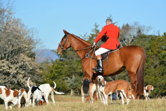 Just Doing Some Light Stalking Of My Boy Leo At The Thanksgiving Hunt Photo By Kate Samuels