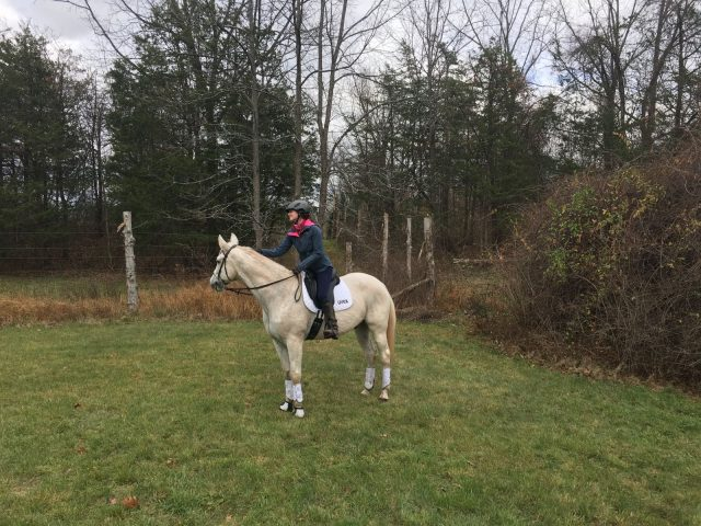 BUA saddle hunt equestrian