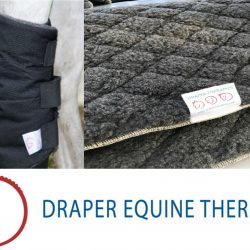 Photos courtesy of Draper Equine Therapy.