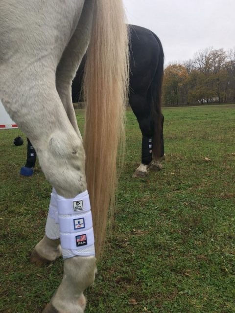 Majyk Equipe provides superb leg protection for horses when jumping solid obstscles