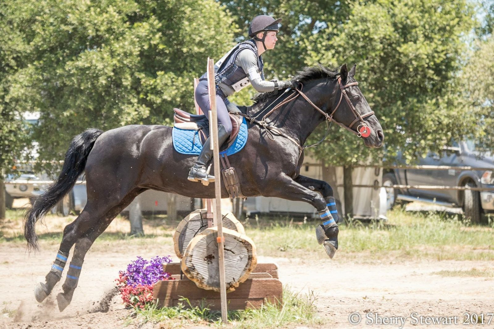 Valentine My Friesian Event Horse Eventing Nation Three Day Eventing News Results Videos And Commentary