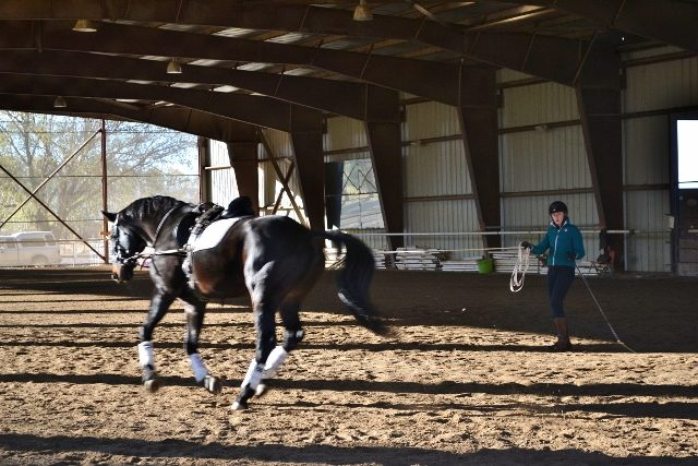 Safe Successful Lunging With Side Reins Eventing Nation