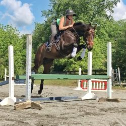 Why yes, I will humblebrag about the way my horse jumps this tiny oxer.
