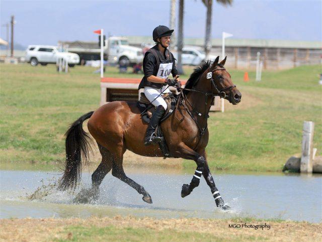 Sport Horse Nation Spotlight: New Year, New Horse
