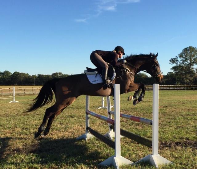 Sport Horse Nation Spotlight: 6 Fabulous 4-Year-Olds