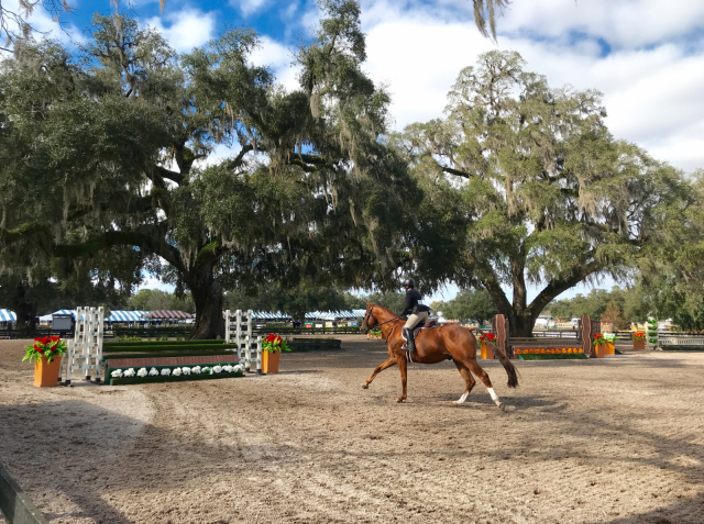 5 Fun Activities for Your (and/or Your Horse's) Day Off in Ocala