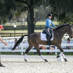 Dressage — sometimes you remember to sit up, sometimes you flail your elbows around like a chicken. Photo by Leslie Mintz/USEA.